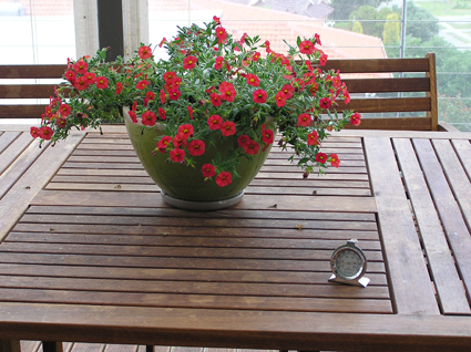 Still life of flowers, outdoor table and oven thermometer: sometimes you have to improvise